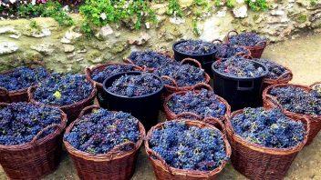 Das Weinfest in Montmartre