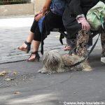 Urlaub mit Hund in Paris – Tipps und Infos